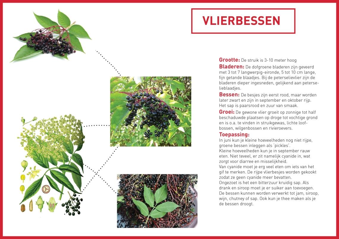 vlierbes - groene avonturen