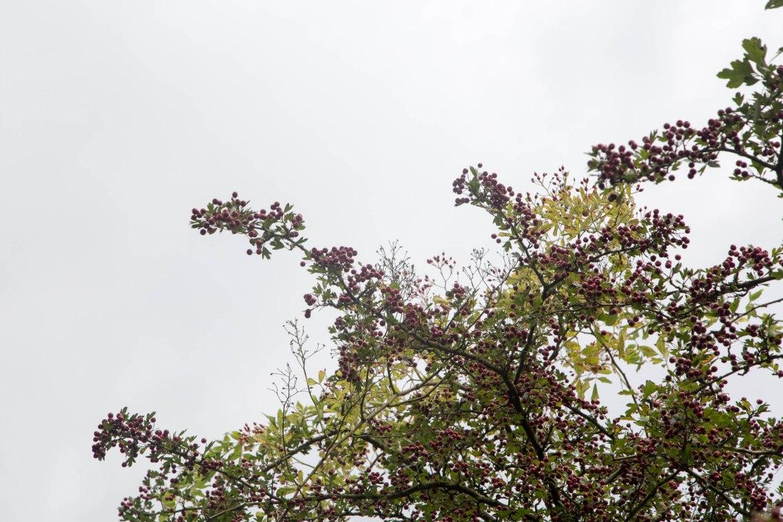 wildplukken-meidoorn-groene-avonturen-3