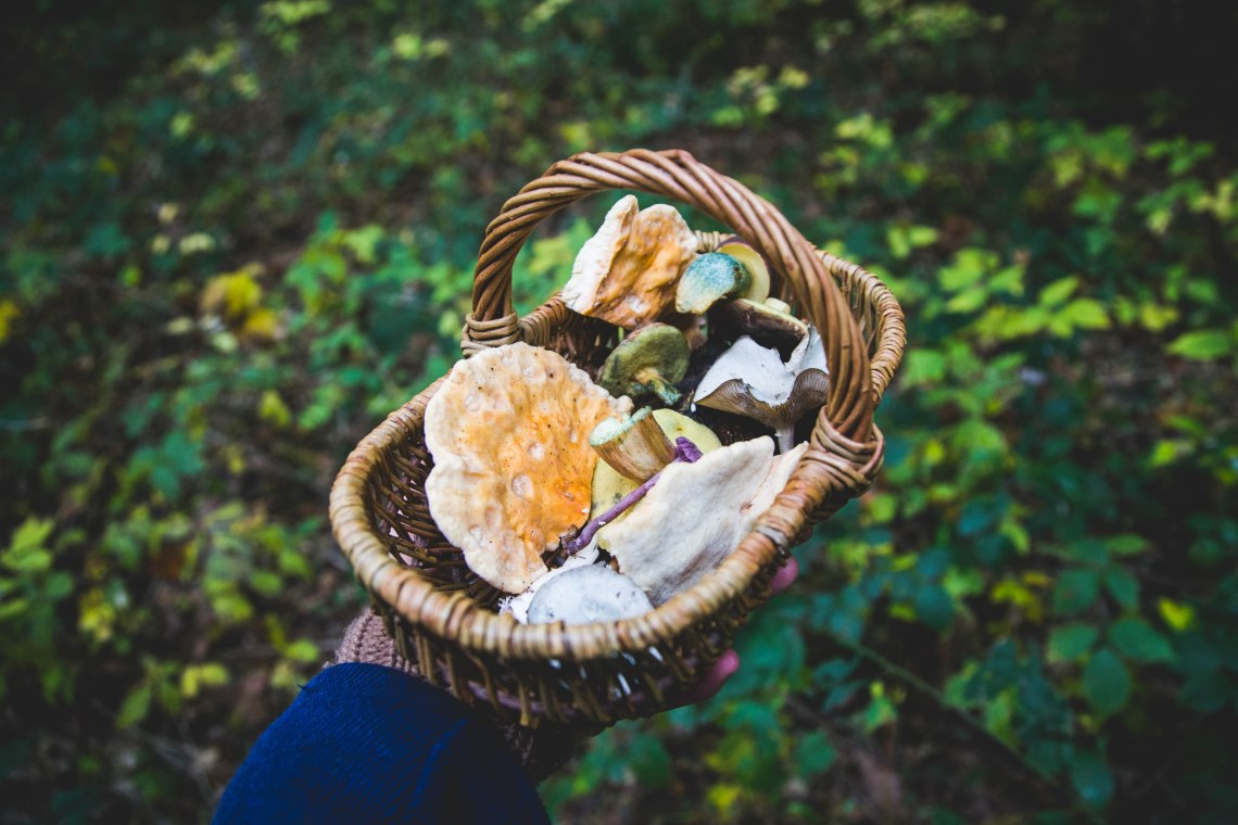 groene-avonturen-paddenstoelen