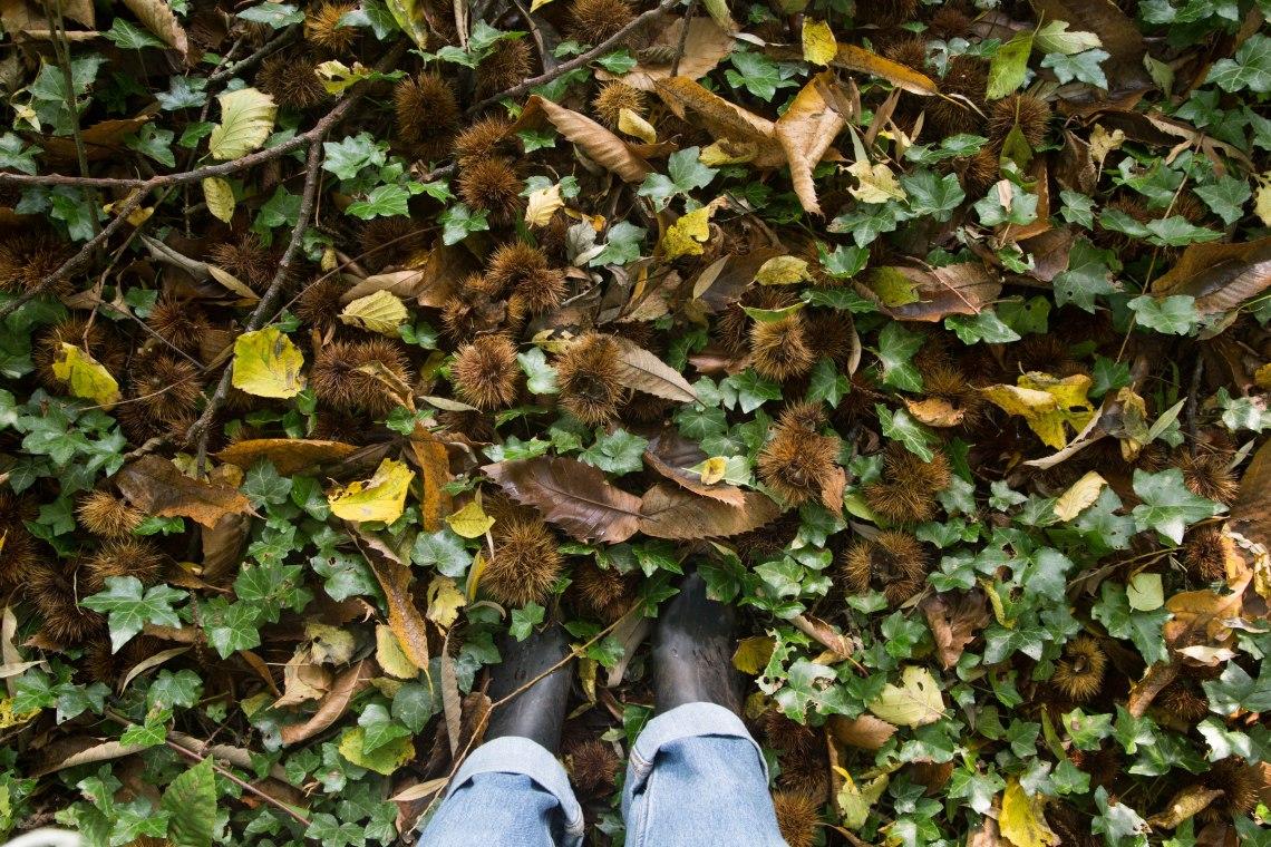 groene-avonturen-wildplukken-tamme-kastanje-4